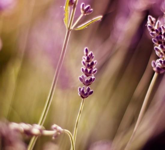slider-lavender